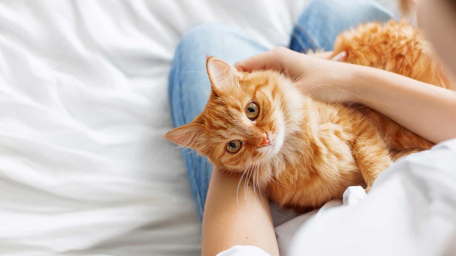 Vet Near Me | Blog | Courteous cats