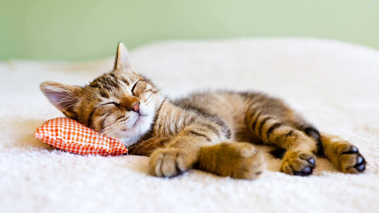 Feline AIDS – Is your cat protected