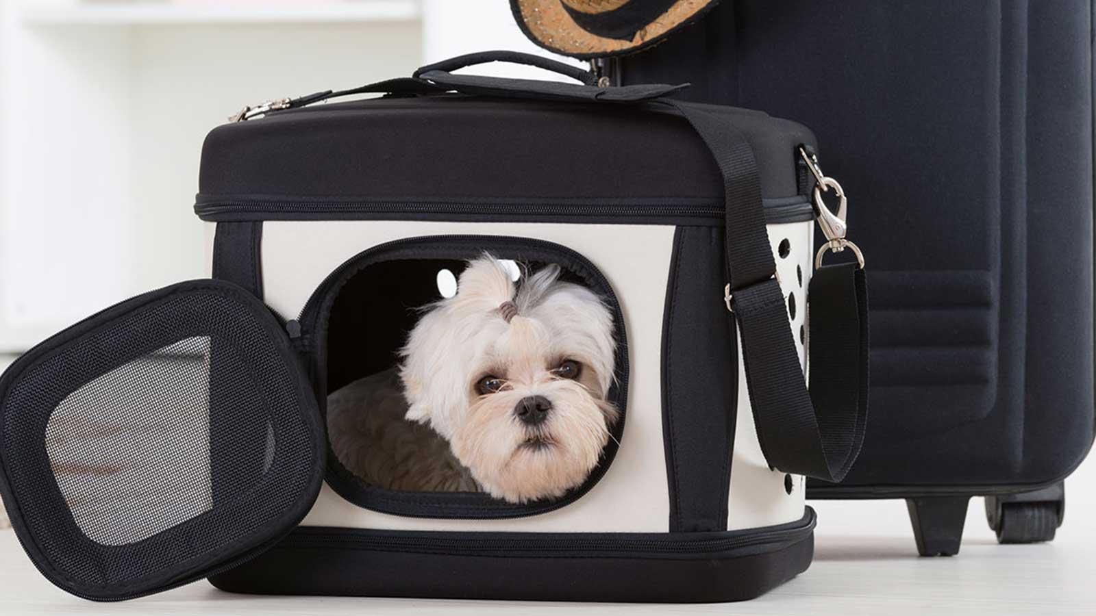 Taking your pet overseas – export preparation